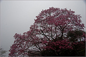 98.02.28竹子湖:nEO_IMG_IMGP6432.jpg
