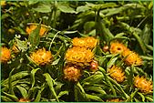97.04.05(1)大屯花卉農場:nEO_IMG_IMGP7518.jpg