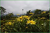 97.04.05(1)大屯花卉農場:nEO_IMG_IMGP7523.jpg