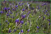 97.04.05(1)大屯花卉農場:nEO_IMG_IMGP7525.jpg