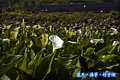 97.03.27藍天‧海芋‧竹子湖:nEO_IMG_IMGP7048.jpg