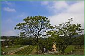 97.04.05(1)大屯花卉農場:nEO_IMG_IMGP7526.jpg