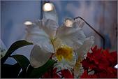 2009台北國際花卉展:花草集:nEO_IMG_IMGP7047.jpg
