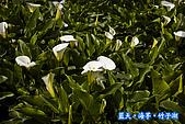 97.03.27藍天‧海芋‧竹子湖:nEO_IMG_IMGP7049.jpg