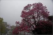 98.02.28竹子湖:nEO_IMG_IMGP6437.jpg