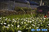 97.03.27藍天‧海芋‧竹子湖:nEO_IMG_IMGP7051.jpg