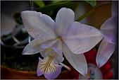 2009台北國際花卉展:花草集:nEO_IMG_IMGP7049.jpg