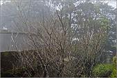 98.02.28竹子湖:nEO_IMG_IMGP6441.jpg