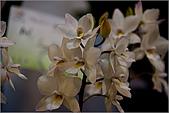 2009台北國際花卉展:花草集:nEO_IMG_IMGP7050.jpg