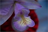 2009台北國際花卉展:花草集:nEO_IMG_IMGP7051.jpg