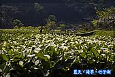 97.03.27藍天‧海芋‧竹子湖:nEO_IMG_IMGP7055.jpg