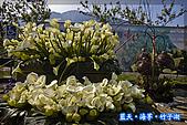97.03.27藍天‧海芋‧竹子湖:nEO_IMG_IMGP7148.jpg