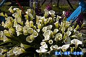 97.03.27藍天‧海芋‧竹子湖:nEO_IMG_IMGP7149.jpg