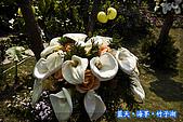 97.03.27藍天‧海芋‧竹子湖:nEO_IMG_IMGP7057.jpg