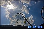 97.03.27藍天‧海芋‧竹子湖:nEO_IMG_IMGP7058.jpg
