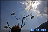 97.03.27藍天‧海芋‧竹子湖:nEO_IMG_IMGP7059.jpg