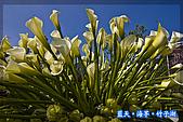 97.03.27藍天‧海芋‧竹子湖:nEO_IMG_IMGP7151.jpg