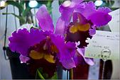 2009台北國際花卉展:花草集:nEO_IMG_IMGP7053.jpg