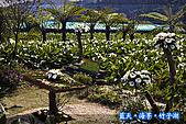 97.03.27藍天‧海芋‧竹子湖:nEO_IMG_IMGP7060.jpg