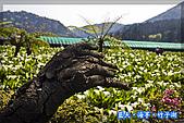 97.03.27藍天‧海芋‧竹子湖:nEO_IMG_IMGP7062.jpg