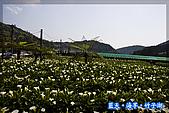 97.03.27藍天‧海芋‧竹子湖:nEO_IMG_IMGP7063.jpg