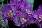 2009台北國際花卉展:花草集:nEO_IMG_IMGP7054.jpg