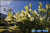 97.03.27藍天‧海芋‧竹子湖:nEO_IMG_IMGP7152.jpg