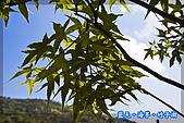 97.03.27藍天‧海芋‧竹子湖:nEO_IMG_IMGP7064.jpg