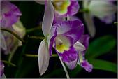 2009台北國際花卉展:花草集:nEO_IMG_IMGP7055.jpg