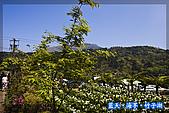 97.03.27藍天‧海芋‧竹子湖:nEO_IMG_IMGP7065.jpg