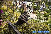 97.03.27藍天‧海芋‧竹子湖:nEO_IMG_IMGP7066.jpg