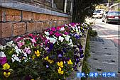 97.03.27藍天‧海芋‧竹子湖:nEO_IMG_IMGP7068.jpg