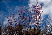 98.02.28陽明山花季:nEO_IMG_IMGP6250.jpg