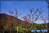 97.03.27藍天‧海芋‧竹子湖:nEO_IMG_IMGP7069.jpg