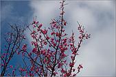 98.02.28陽明山花季:nEO_IMG_IMGP6251.jpg