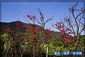 97.03.27藍天‧海芋‧竹子湖:nEO_IMG_IMGP7070.jpg