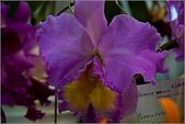 2009台北國際花卉展:花草集:nEO_IMG_IMGP7057.jpg