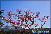 97.03.27藍天‧海芋‧竹子湖:nEO_IMG_IMGP7071.jpg