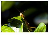 97.09.06富陽自然生態公園:cc19.jpg