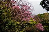 98.02.28陽明山花季:nEO_IMG_IMGP6253.jpg