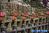 97.03.27藍天‧海芋‧竹子湖:nEO_IMG_IMGP7073.jpg