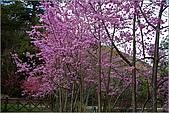 98.02.22武陵農場遇見櫻花的那一刻:1002.jpg