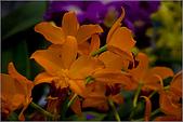 2009台北國際花卉展:花草集:nEO_IMG_IMGP7058.jpg