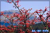 97.03.27藍天‧海芋‧竹子湖:nEO_IMG_IMGP7075.jpg