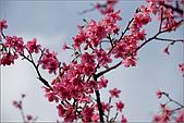98.02.28陽明山花季:nEO_IMG_IMGP6255.jpg