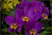 2009台北國際花卉展:花草集:nEO_IMG_IMGP7059.jpg