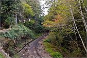 2009阿里山櫻花季:IMGP7489.jpg