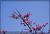 97.03.27藍天‧海芋‧竹子湖:nEO_IMG_IMGP7077.jpg
