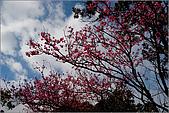 98.02.28陽明山花季:nEO_IMG_IMGP6256.jpg