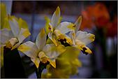 2009台北國際花卉展:花草集:nEO_IMG_IMGP7060.jpg